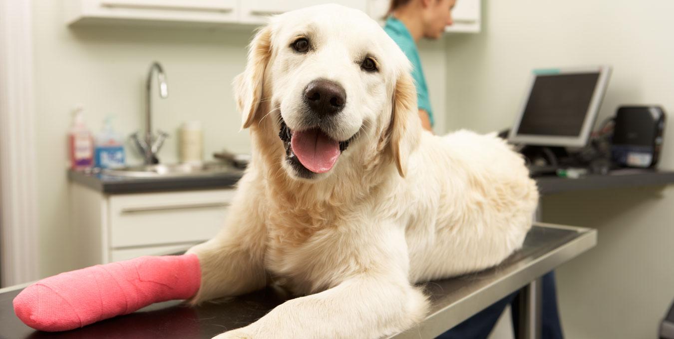 Cirugía de rodilla para perros y gatos