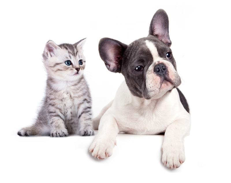 Esterilización para perros