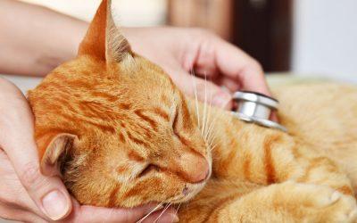 ¿Cómo saber si mi gato está enfermo?