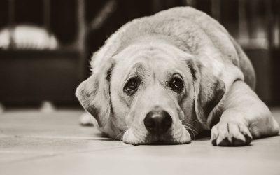 Tratamiento esterilización perros