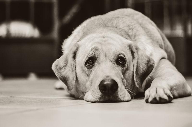 ¿Cómo afecta el confinamiento a los perros? Consejos Covid-19