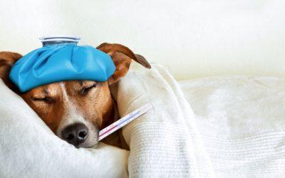 ¿Cómo detectar y prevenir la giardiasis en tu mascota?