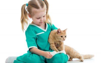 Lipidosis Hepatica o Síndrome del hígado graso felino