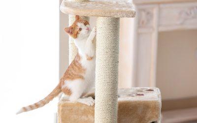 ¿Por qué mi gato necesita un rascador?