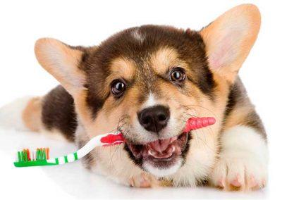 Limpieza dental perros Barcelona