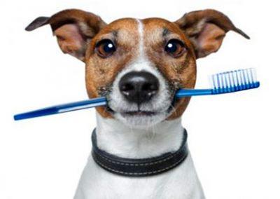 Limpieza bucal perro Barcelona