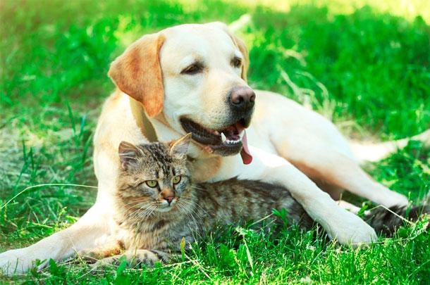 Esterilización de perros y gatos