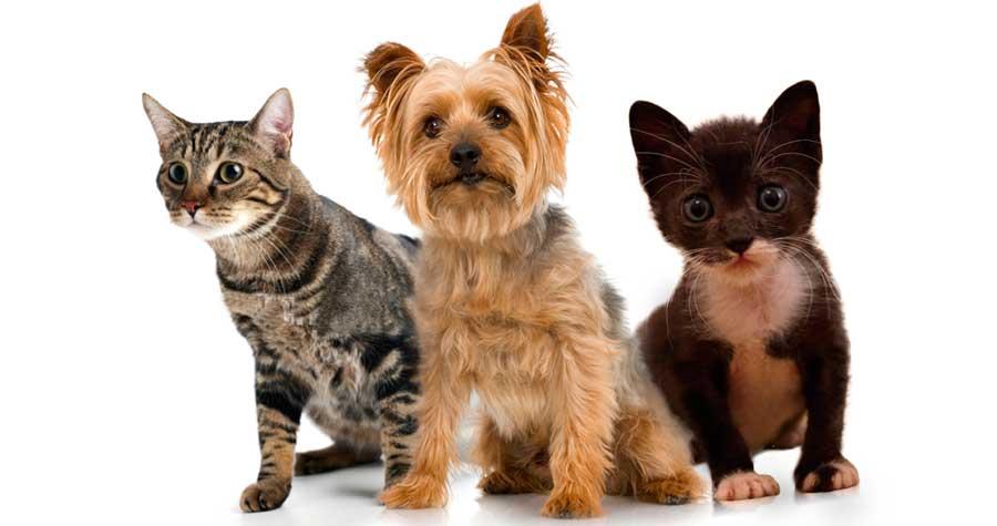 Esterilización perros y gatos