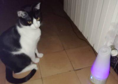 veterinario-gatos-barcelona-03
