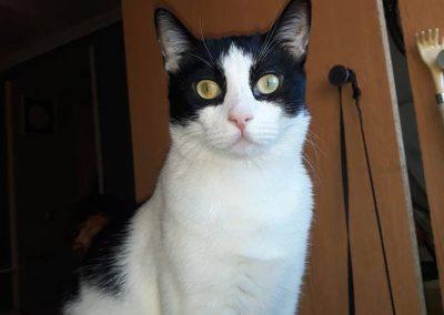 veterinario-gatos-barcelona-05