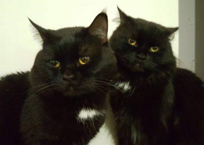 veterinario-gatos-barcelona