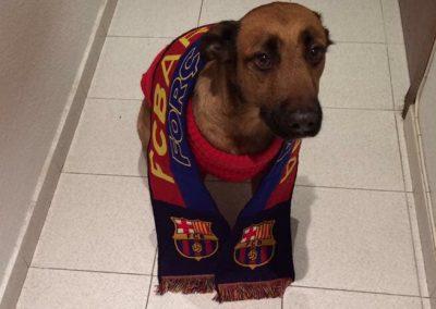 veterinario-perros-barcelona