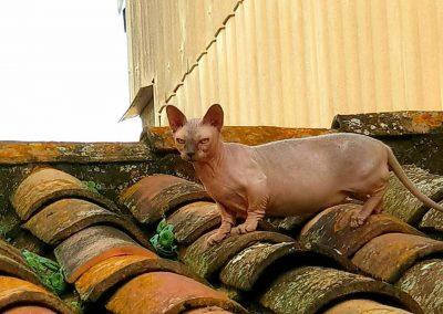 gatos-barcelona-9