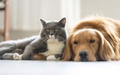 Coronavirus: Consejos para dueños de  perros y gatos