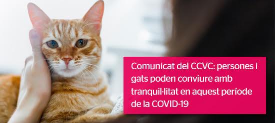 Comunicat oficial: Els gats i el COVID-19